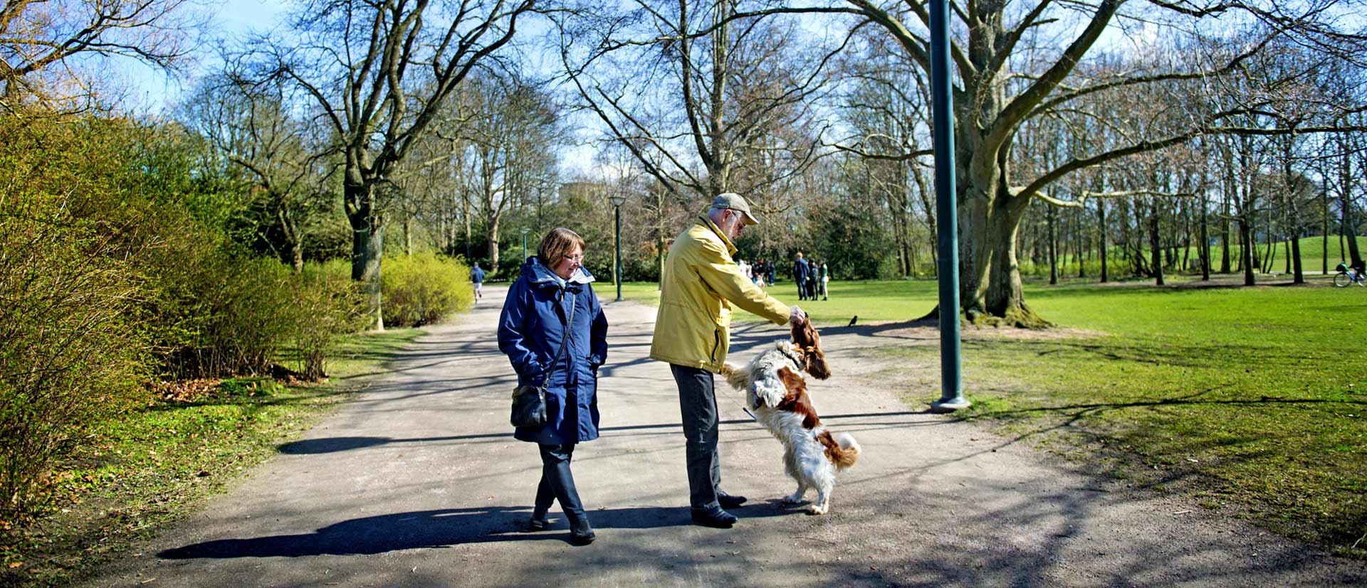 Elder couple walking in a park with a dog