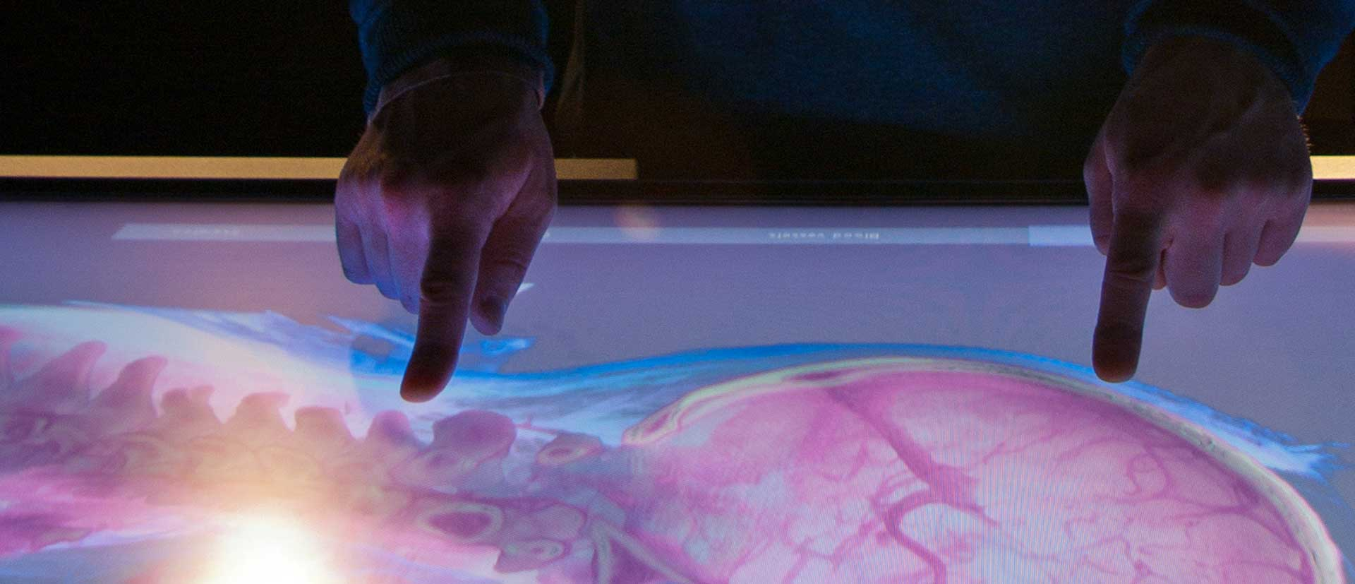 Fingers touching an interactive screen